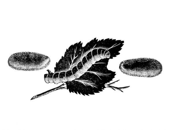 Entretien avec Marco Ceriani, créateur d'Italbugs les protéines à base d'insectes